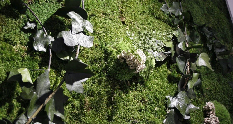 detalles de la planta conservada