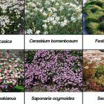 Selección de especies para jardines verticales con flores