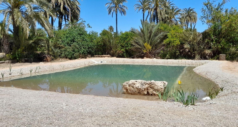 Piscina natural con planta en Elche Alicante