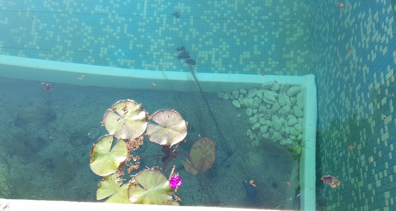 Detalle plantas acuáticas piscina ecológica